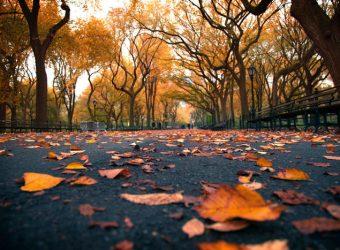 fall-nyc