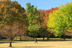 autumnicu