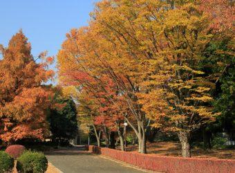 autumn-chapel-trees